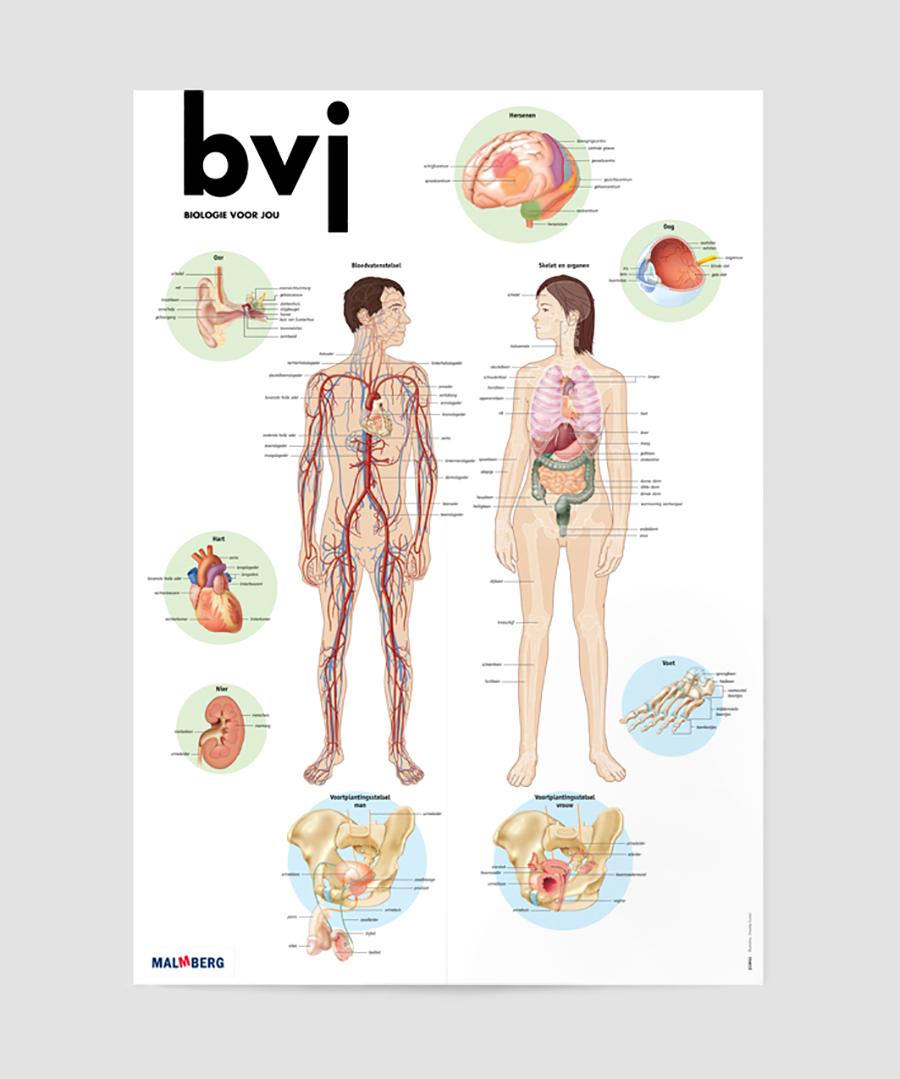 bvj_poster2